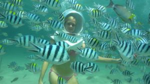 coral-island-activities